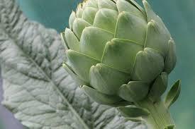 No comes alcachofas? 20 beneficios saludables a tener en cuenta