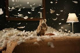 Foto Eule Vogel Federn Bett Tiere