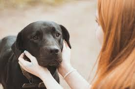 Diabetic Service Dog Training San ...