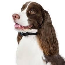 Premier Pet Inground Add A Dog Collar Sam S Club