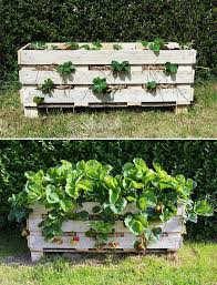 diy ideas for growing strawberries