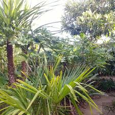 tropical plants you can use to create a