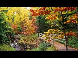 The Autumn Leaves By Nat King Cole - YouTube