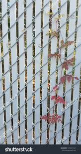 Chain Link Fence White Slats Red Backgrounds Textures Stock Image 1279511947