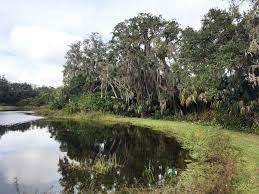 a SW Florida retention pond walkabout… | 101 species