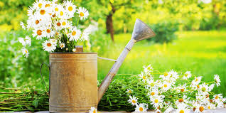 summer flowers for your home and garden