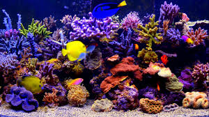 aquarium live wallpaper by smithjerry