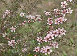 plant in your garden to attract native