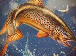 trout fishing wallpapers wallpaper cave