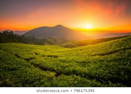 Image result for sunrise on a farm