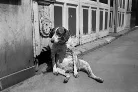 Richard Kalvar: Photo Poche • Magnum Photos | Dog print art, Dog art, Magnum  photos