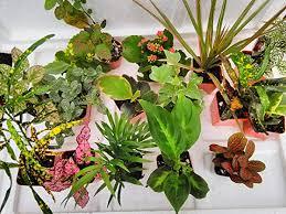 easy to grow terrarium plants