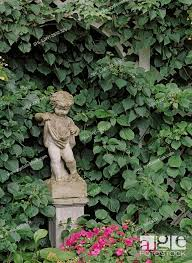 Gardens Privacy Fence Of Lattice And Climbing Hydrangea Cherub Statuary On Pedestal Impatiens Stock Photo Picture And Rights Managed Image Pic Shl Ljw1 2832 326 Agefotostock