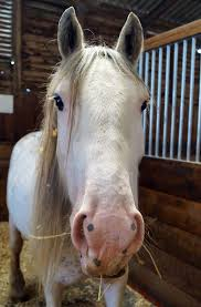 If you've visited Redwings Ada Cole this... - Redwings Horse Sanctuary |  Facebook
