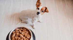 best dog foods for picky eaters