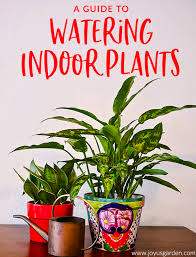 a guide to watering indoor plants joy
