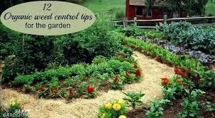 weed and grass for vegetable garden