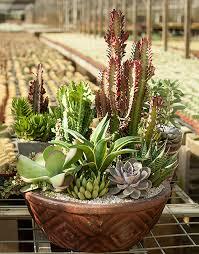 container gardens with desert escape