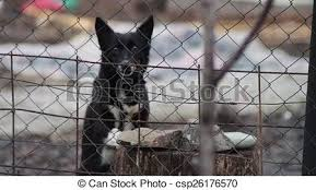 Dog Barking Behind A Fence Mongrel Dog Dog That Guards And Barks At People Passing Behind The Fence
