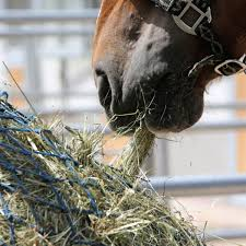 expert advice on selecting hay expert