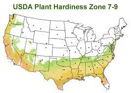 grow in usda plant hardiness zone