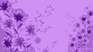 lavender color wallpaper 56 pictures