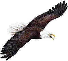 Amazon Com Walls Of The Wild Eagle Wall Decal 28 In X 14 In Home Kitchen