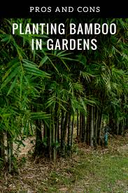 benefits and downsides to growing bamboo
