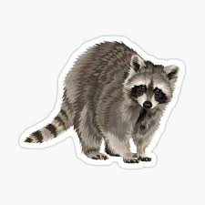 Raccoon Stickers Redbubble