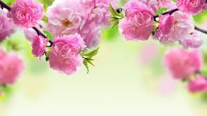 Image result for hoa cỏ mùa xuân