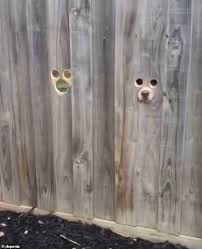 The Owner Makes Ingenious Holes In The Fence For His Curious Pets To See Passers By