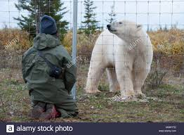 Canada Manitoba Province Hudson Bay Nanuk Polar Bear Lodge Stock Photo Alamy