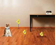 Indoor Dog Fence Watertown Wi Electronic Fencing Baraboo Wi Fence