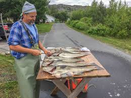 PAUL SMITH: Fishing regulations in Newfoundland and Labrador — for the love  of cod, what are the actual rules? | Regional-Perspectives | Opinion |  SaltWire