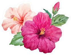 Delicate Purple And Pink Hibiscus With Leaves Sticker
