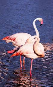 Image result for animal gracieux