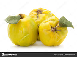 quince fruit closeup stock photo