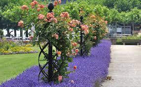 rose obelisks plant obelisks garden