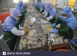 Workers at a seafood factory are busy ...