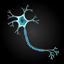 neuron cell - Google Search | Ilustración médica, Modelo de ...