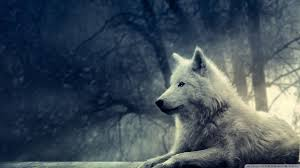 White Wolf Wallpapers Top Free White Wolf Backgrounds