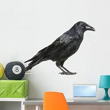 Amazon Com Wallmonkeys Carrion Crow Wall Decal Peel And Stick Animal Graphics 36 In W X 24 In H Wm76675 Home Kitchen