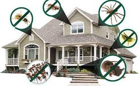 Reasons To Hire A Professional Pest Control Service!