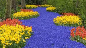 flower garden in hd 1920x1080
