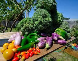 wellness wednesday vegetable gardening