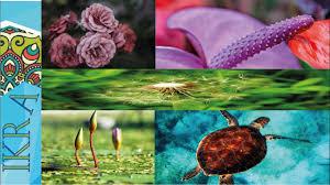 تحميل أروع خلفيات الطبيعة الساحرة 2017 صور خلفيات جميلة مناظر