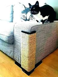 protect sofa from cat colorings co