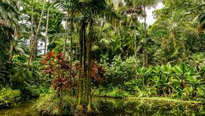 big island botanical gardens big