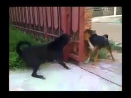 I Don T Know What S The Problem With Those 2 Dogs Barking Each Other Youtube