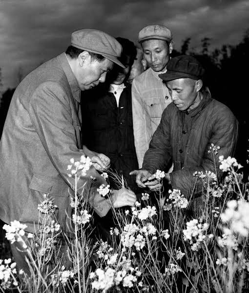 Resultado de imagem para Mao revolução chinesa